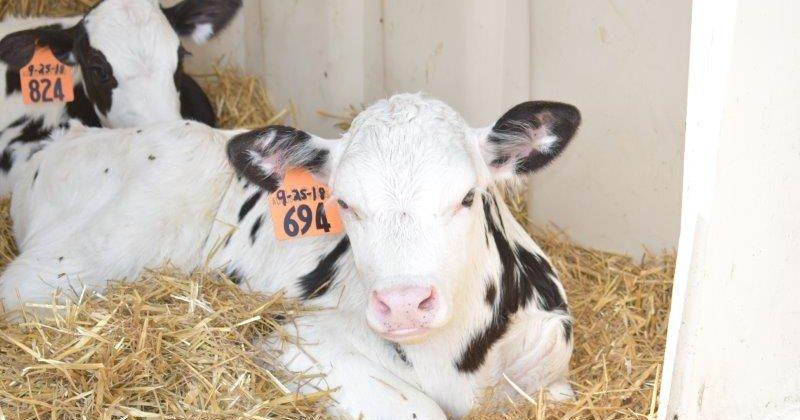 Farm Facts – 2021 Hosts: Augustian Farms